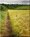 SU0027 : Bridleway to Fovant Down by Derek Harper