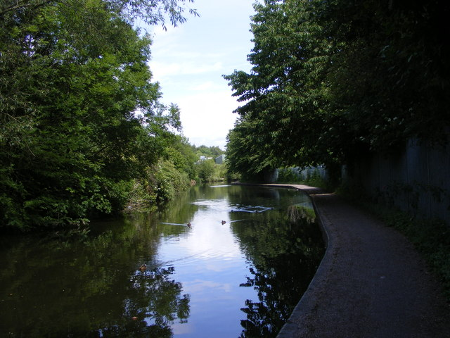 Canal Trees