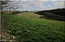 SX3477 : Fields near Treburley by Derek Harper