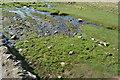 SD9163 : Springs, Gordale Scar by N Chadwick
