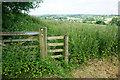 SK1747 : Undefined path through nettles by Bill Boaden
