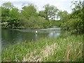 TQ0189 : Chalfont St Peter: Chalfont Park Lake (2) by Nigel Cox