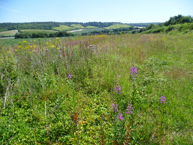 Rosebay willowherb and ragwort above the valley of the Great Stour