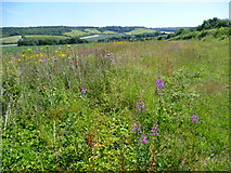 TR0749 : Rosebay willowherb and ragwort above the valley of the Great Stour by Marathon