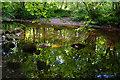 SE0755 : River Wharfe, Strid Wood by Ian Taylor