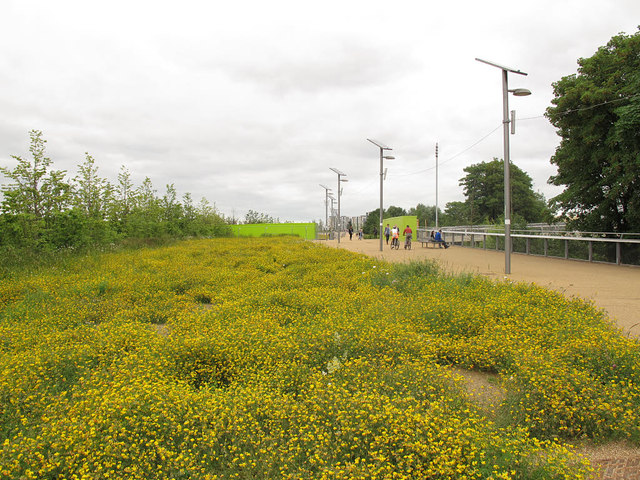 Olympic Park: weeds