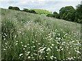 SU7339 : Alton flowers by Peter S