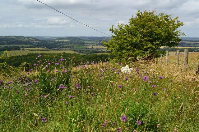 View near Win Green
