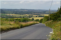 ST9120 : Road descending from Charlton Down by David Martin