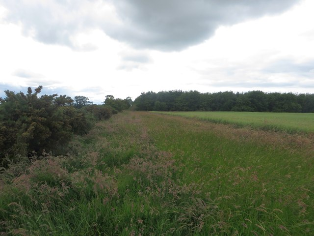 Arable field margin near Watchlaw