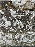 SS5318 : Ordnance Survey Cut Mark by Adrian Dust