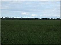 NT1474 : Oilseed rape crop near Wheatlands by JThomas