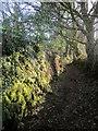 SX4272 : Footpath to Dimson by Derek Harper