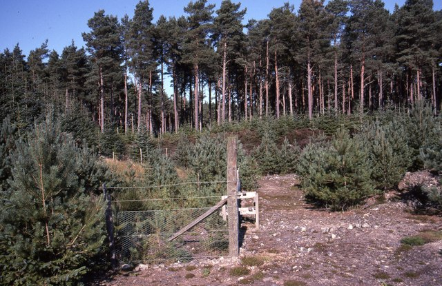 The Prosamo Experiment in Camore Wood