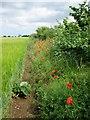 SE8875 : Field  edge  footpath by Martin Dawes