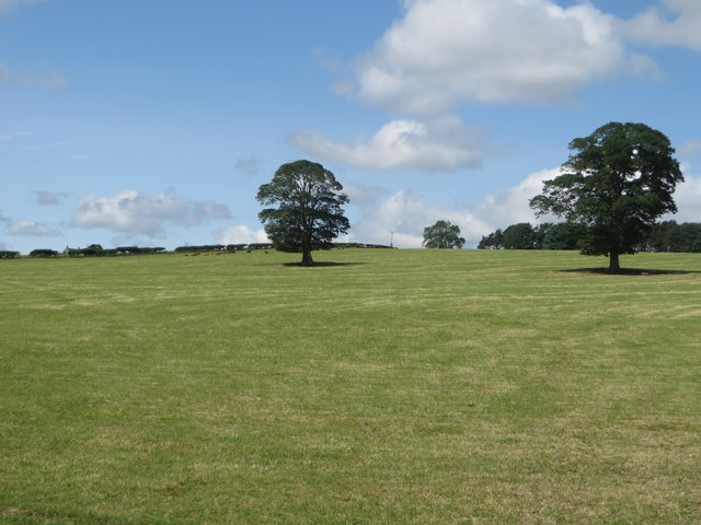 Grass field with trees at Snipe House