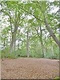 SU2913 : Rockram Wood by Mike Faherty