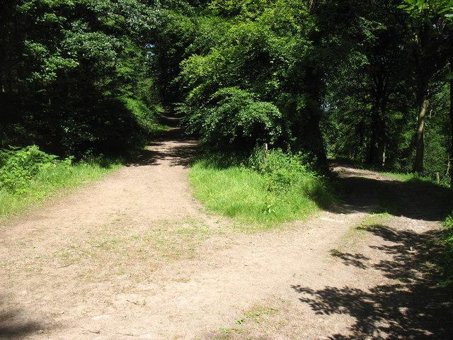 Junction of tracks in Cuckoo Wood