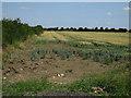 TL3868 : Field by Gravel Bridge by Hugh Venables