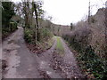 SO5306 : Lanes fork, Whitebrook by Jaggery
