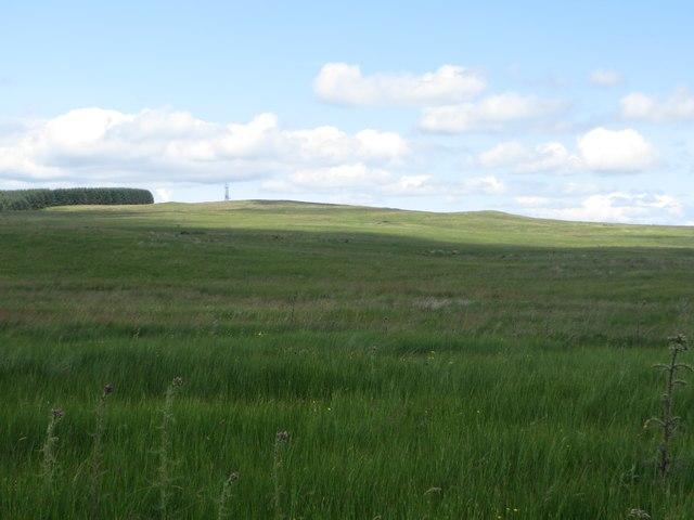 Rough grassland west of Freemans Hill