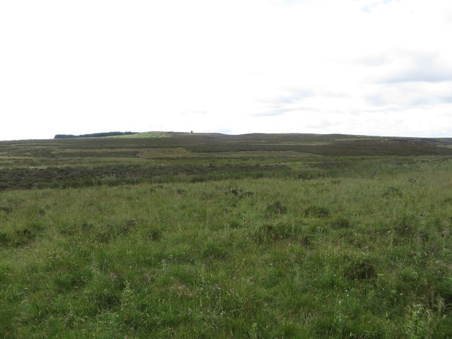 Rough grassland and moor