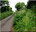 SN3608 : Track north into National Trust land, St Ishmael by Jaggery