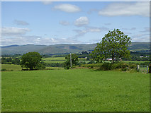 NY6720 : Field beside Barrowmoor Road by Oliver Dixon