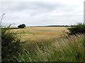 TL1537 : Ripening crops near Meppershall by John Lucas