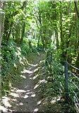 SX5547 : Footpath in Eastern Hill Wood by David Smith