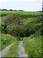 SS2319 : Narrow lane to Elmscott, Devon by Roger  Kidd