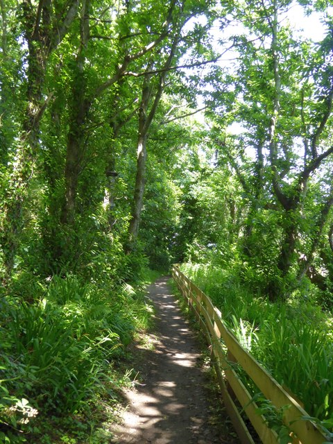 Footpath in Centry Wood near Stoke Beach