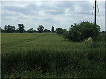 TL6695 : Crop field and hedgerow, Methwold Severals by JThomas