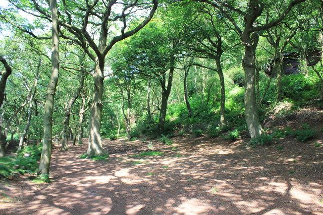 Broadleaved Woodland on Woodhouse Hill