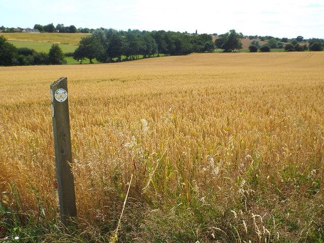 Footpath marker near Great Oakley