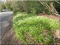 SU9567 : Whitmore Lane Sunningdale by Mick Crawley