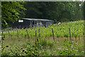 TQ0548 : Vineyard shed, Albury Down by Alan Hunt