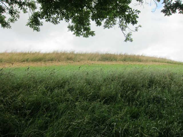 The SE boundary ramparts of Maes Knoll, an Iron Age Hill Fort