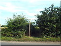 TM1624 : Public footpath through bushes near Beaumont by Malc McDonald