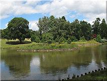 SJ6855 : Queen's Park: lake, island by Stephen Craven