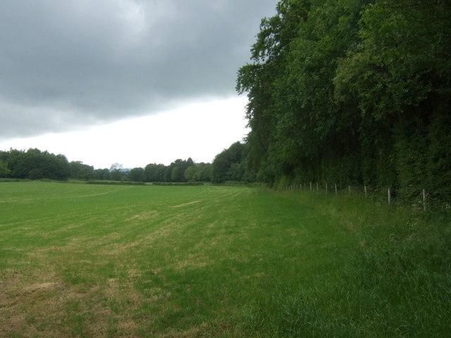 Farmland beside Carr Wood
