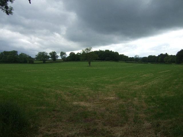 Farmland near Carr Wood