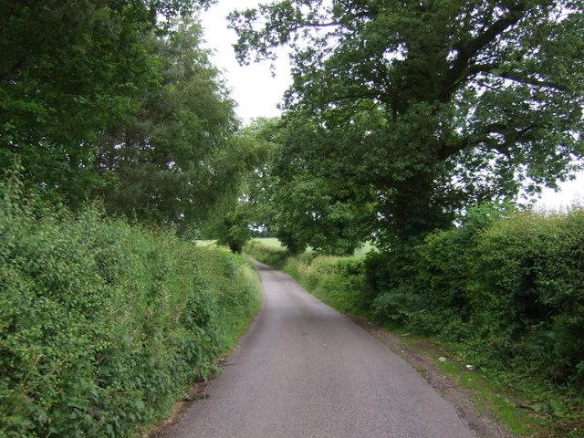 Lane beside Carr Wood