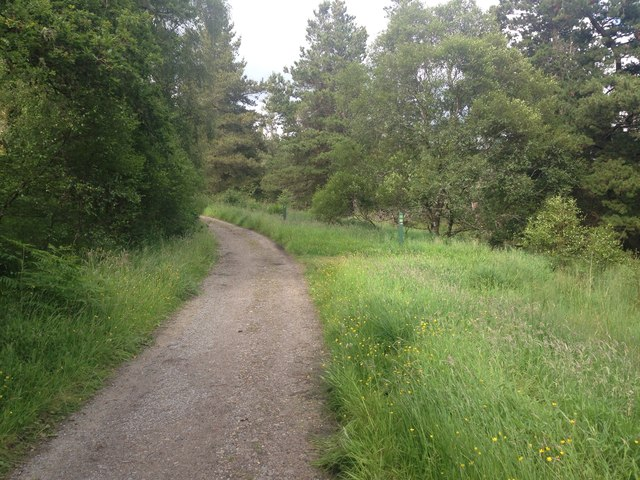 Forestry path, Ariundle