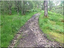 NM8464 : Path, Ariundle Wood by Steven Brown