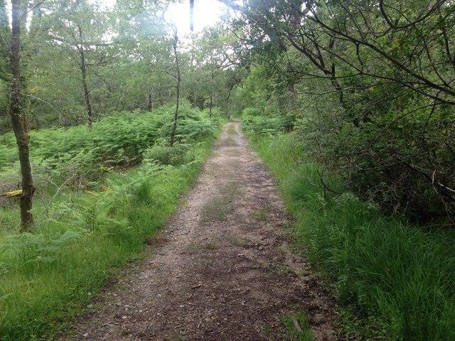 Path, Ariundle Wood