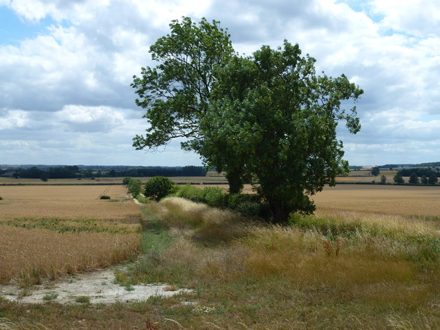 Field boundary near Willow Bank Farm, Woodnewton