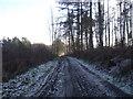 SO5188 : Track through Playground Plantation near Munslow by Rob Bainbridge