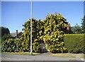 SU9170 : Trees around the door on New Road by David Howard