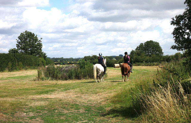 Horses on the Jubilee Way